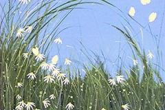 daisygrass-tami